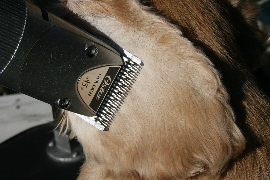 Problmes oculaires Dog Dans cockers Quels sont les