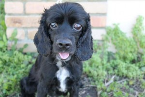 Mobley is availble for adoption