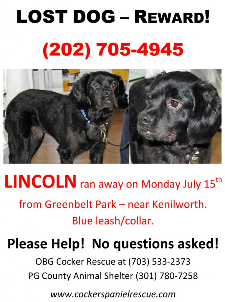 Lost Rescue in Greenbelt, MD