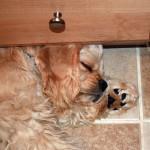 Hoshi lying by AC vent