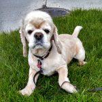 image of my dog Hoshi
